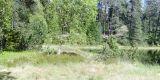 Herrenwieser lago, bosque negro norteño
