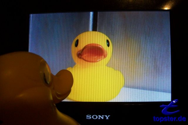 "And there, you can see my ducks girlfriend on TV. It is a ducks star and can sing super well. Is your current song ""Yellow Duck"""