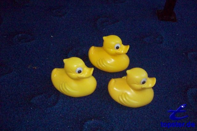 Are duck-Anna, duck-Bernd and duck-Tom