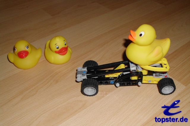 Duck on track with spectators
