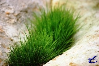 Grass between rocks