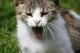 Bocejo de gato