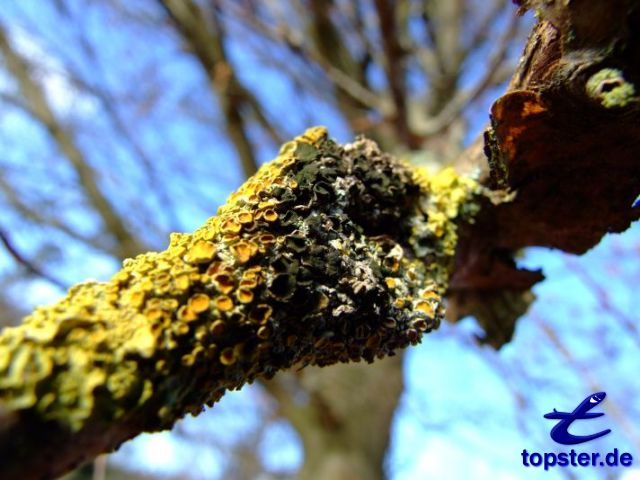 Lichen growth on a tree branch