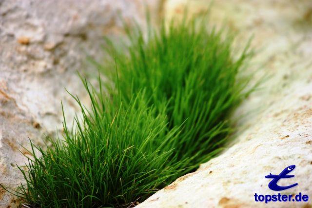 绿色的青蛙草岩石之间
