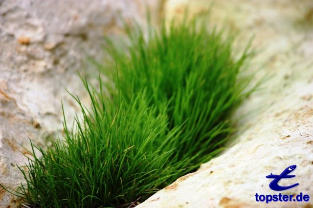 Лягушка зеленая трава между скал