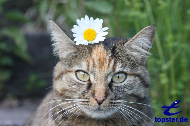 Cat with a flower on her head