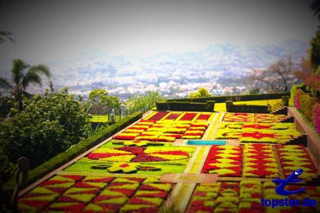Ботанический сад в городе Фуншал
