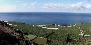 Banana plantations on La Palma