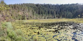 Lake in the northern Black Forest: Huzenbacher Lake